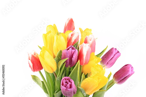 Fototapety, obrazy: bouquet of tulips isolated on white background