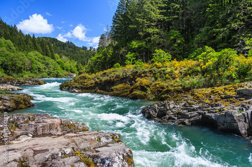 Obraz Mountain river and forest in North Cascades National Park, Washington,  USA - fototapety do salonu