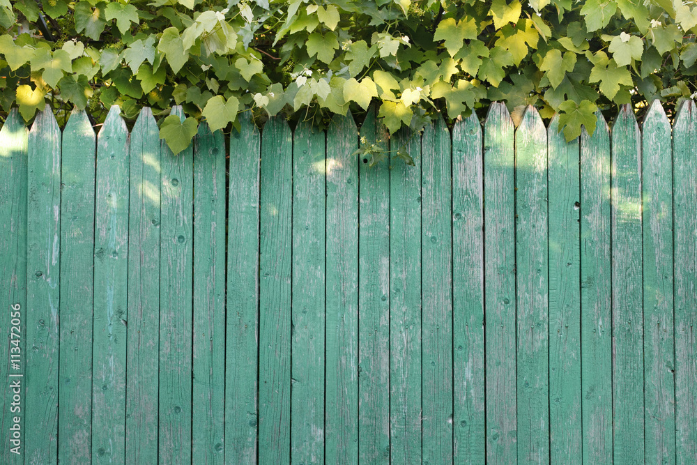 Photo & Art Print wooden texture, wooden fence, barrier, plants ...