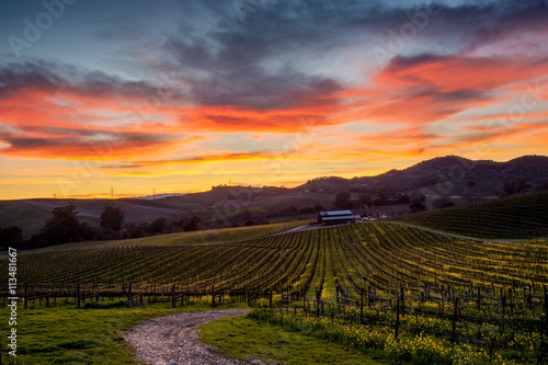 Garden Poster Vineyard Colorful sunset over a Napa California vineyard
