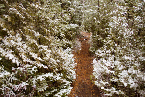 Tuinposter Weg in bos Pathway amidst trees in forest during winter