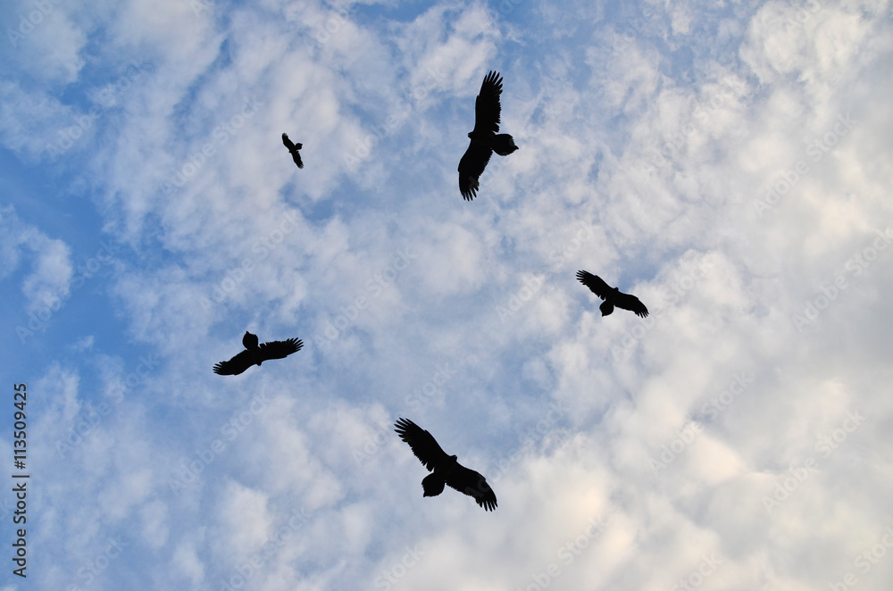 Birds circling in the sky