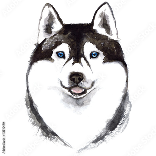 husky dog painted with watercolors on white background sketch dog