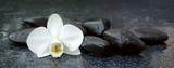 Fototapeta Kwiaty - White orchid and black stones close up.