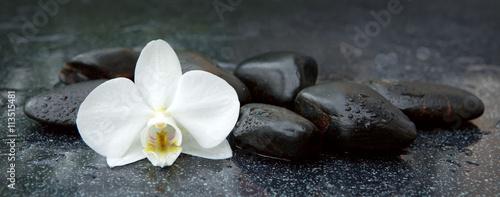 biala-orchidea-i-czarne-kamienie-w-zblizeniu