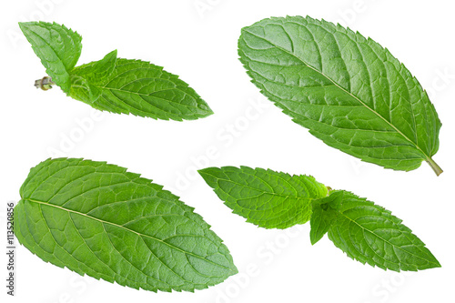 Canvas Prints Condiments Peppermint leaf on white