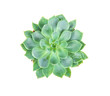 succulents plant in pot on white background , overhead