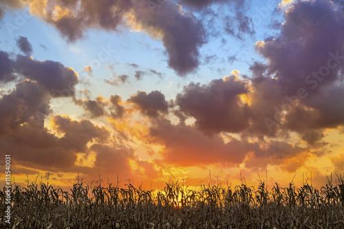 Glorious Harvest Canvas-taulu
