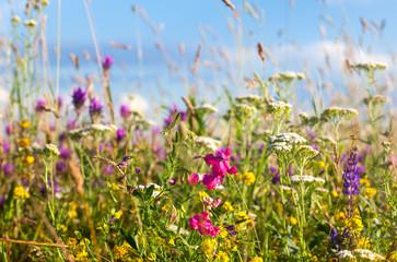 Fototapeta Do gabinetu lekarskiego/szpitala Colorful summer flowers meadow, blue sky in background