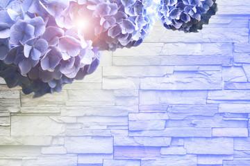 Fototapeta Blue hydrangea flower on brick wall background.