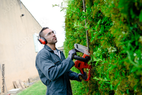 Photo sur Aluminium Noir handsome young man professional gardener trimming and landscaping green hedge