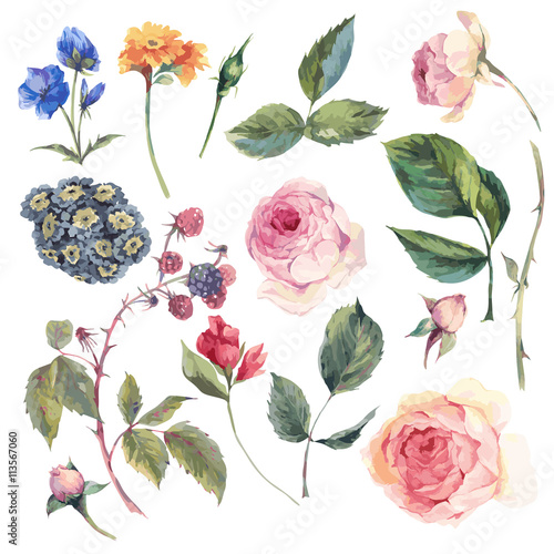 Leinwandbilder - Set vintage vector elements of English roses