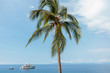 Blue Sea View with Palm Tree and Yacht