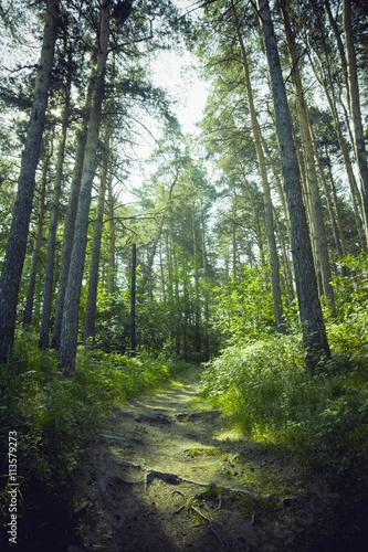 droga-w-zielonym-lesie