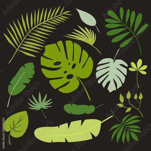Fototapety, obrazy: Set of tropical leaves, floral tropical elements, isolated vector illustration
