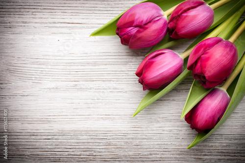 obraz lub plakat Tulip.