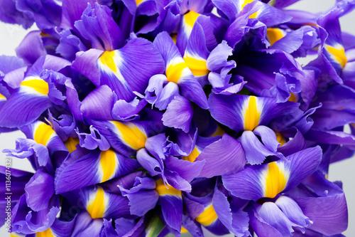 Spoed Foto op Canvas Iris Iris flowers background, spring floral patern.