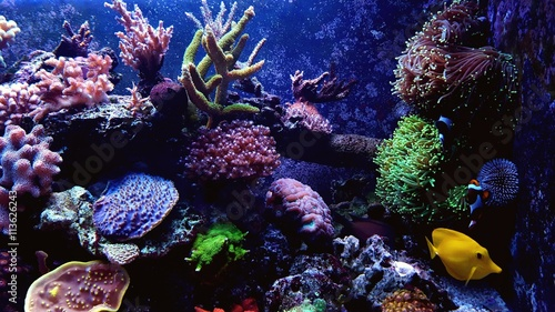 Photo  Tropical aquarium scene