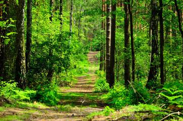 FototapetaDroga prowadzi przez zielony las