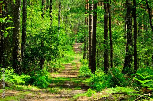 Foto op Plexiglas Weg in bos Droga prowadzi przez zielony las