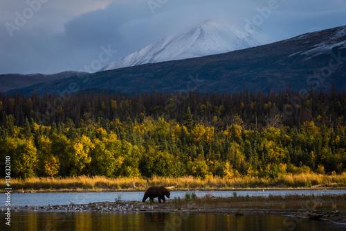 Obrazy na płótnie Canvas Bear in river by mountains
