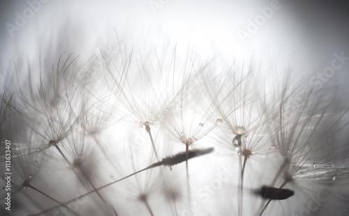 dandelion-abstrakcyjne-tlo-plytka-glebokosc-fi