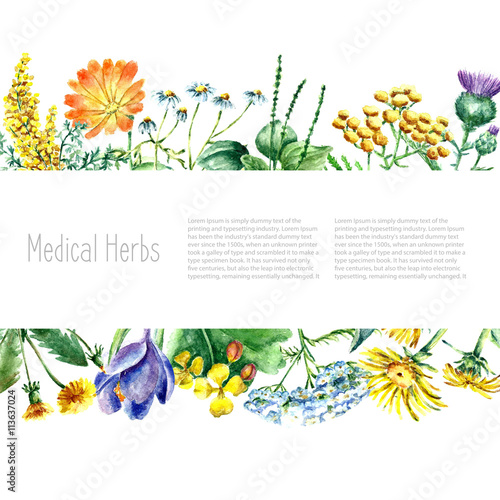 Photo  Collection of hand drawn medical herbs and plants.
