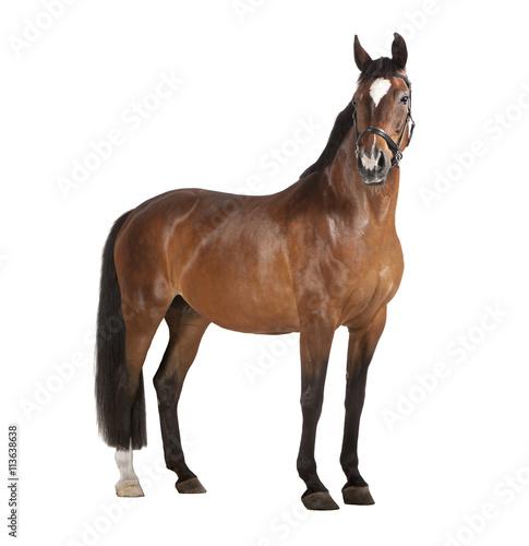 In de dag Paarden Pferd weißer Hintergrund