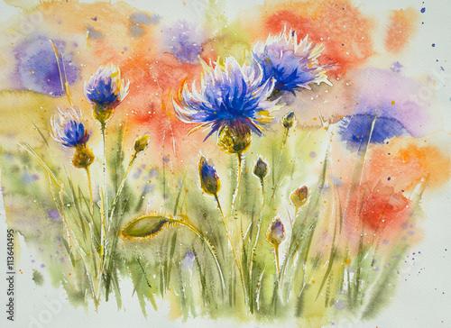 Czerwoni makowi kwiaty w tle, błękitny chabrowy na lato łące Obraz tworzący z akwarelami.