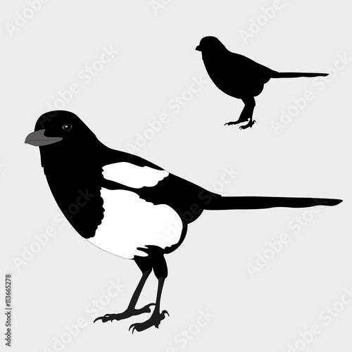 Fotografie, Obraz magpie realistic bird silhouette black vector illustration