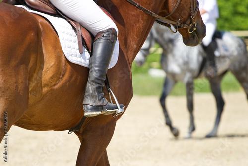 Fotobehang Paardrijden Dressage horse rides