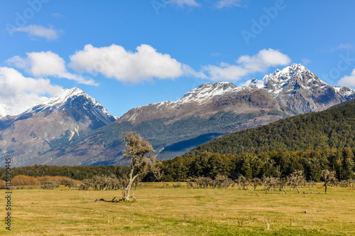 Lonely tree in Glenorchy, New Zealand Wallpaper Mural