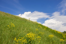 Panorama Of Beautiful Clouds In A Blue Sky Over A Hill With Flowers. Landscape Summer Nature, Wild Fields And Mountains. A Large Sky On A Summer Day.
