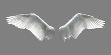 Angel Wings Isolated On Gray B...
