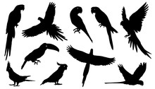 Parrot Silhouettes