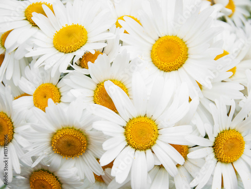 Foto op Canvas Madeliefjes beautiful daisy flowers close up