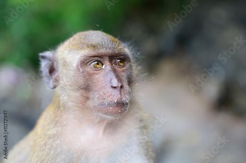 In de dag monkey beach