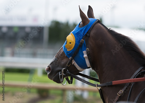 Horse with Blue and Yellow Blinkers