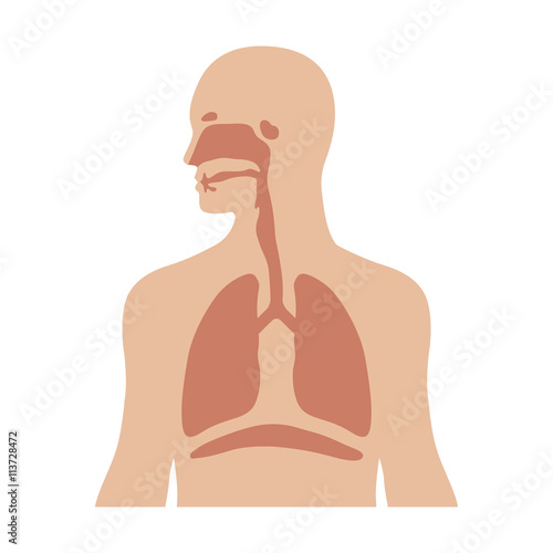 Obraz Human biological respiratory system flat color icon for medical apps and websites - fototapety do salonu