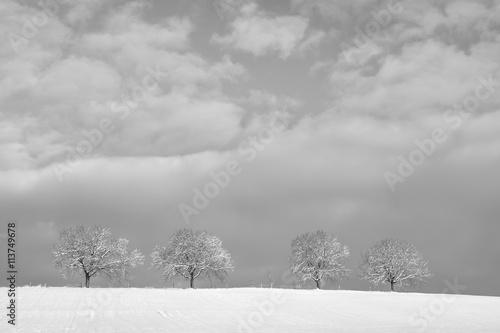 trees in winter landscape (12) © 1stGallery