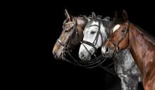 Pferde Collage Schwarzer Hinte...