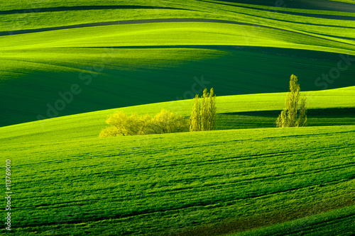 Foto op Plexiglas Groene Green wavy hills in South Moravia