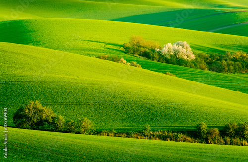 Tuinposter Groene Green wavy hills in South Moravia