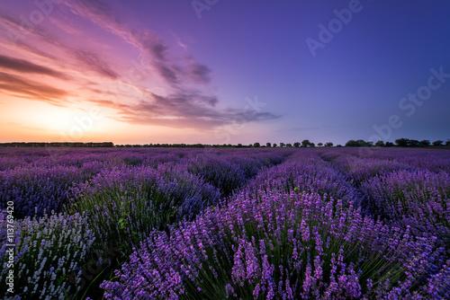 Beautiful image of lavender field Summer sunset.