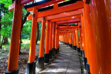 Fototapeta Japoński Bright red Torii in shinto shrine, Kyoto