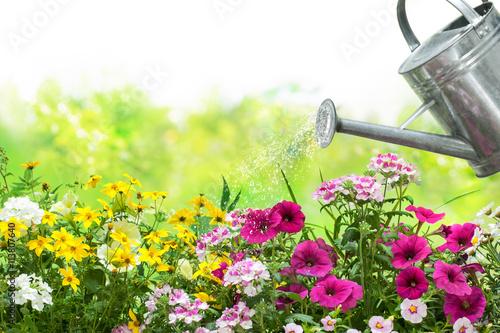 Fotografia  Watering flowers in the garden