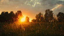 Summer Meadow On The Dusk, Abs...