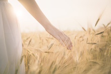 Young  Girl Walking Through Field And Touches Wheat.