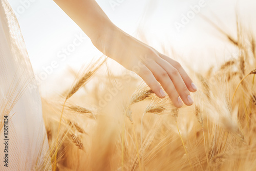 Vászonkép Young  girl walking through field and touches wheat.