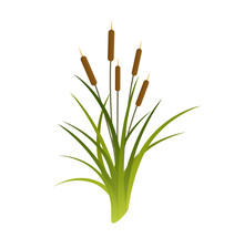 Vector Cattails Illustration